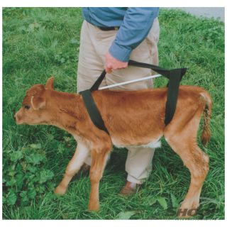 Calf Sling Griffiths
