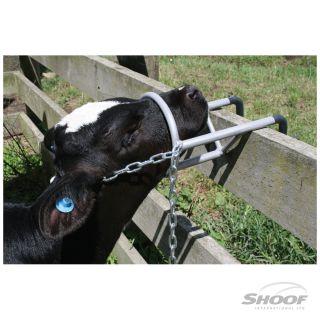 Debudding Restraint Calf