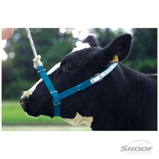 Halter Webbing Cow Blue