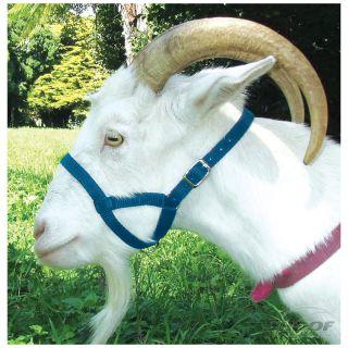 Halter Webbing Goat Small Blue